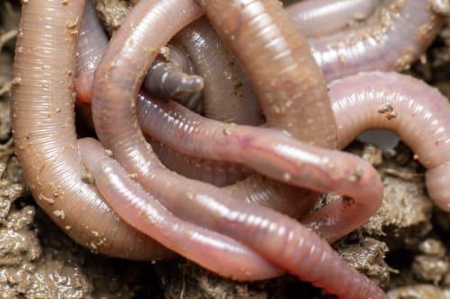 Worms - Maths Activity