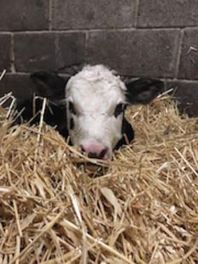 Using the Dairy Quiz