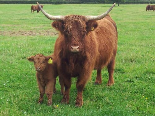 Croxteth Home Farm