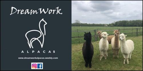 Dreamwork Alpacas