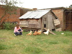 Caenbrook Farm