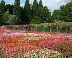 Garden Wisley