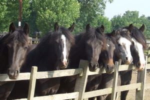 Bransby Home of Rest for Horses