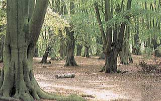 Epping Forest Field Centre