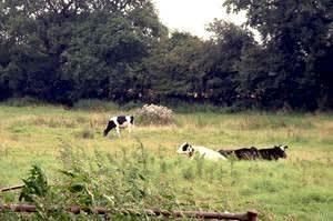 Hill Farm (Norfolk)