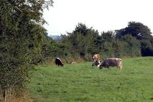 Blagdon Home Farm
