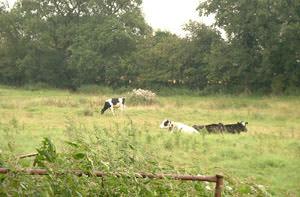 Padworth Park & Village Farm