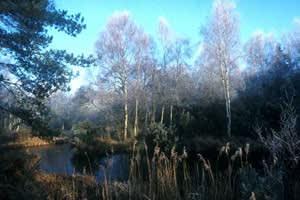 Higher Hyde Heath