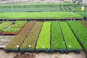 DELFLAND NURSERIES LTD.
