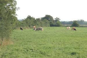 Wood Farm (Castleshaw)