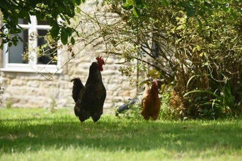 Sundey Hill Farm