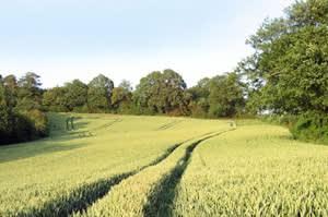 Farnell Farm