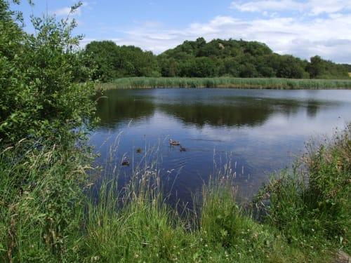 Tees Valley Wildlife Trust - Margrove Ponds
