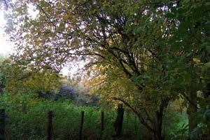 Rectory Farm (Tingewick)
