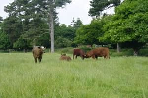 Hanby Lodge Farm