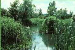 Hanson Environmental Study Centre