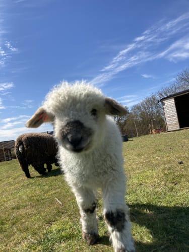 Willow Farm. A Care Farm with Heart