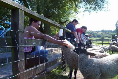Critters Farm