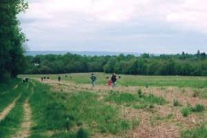 Imberhorne Farm