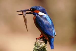 Northumberland Wildlife Trust