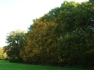 RSPCA Mallydams Wood