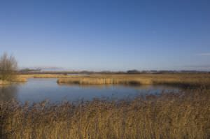 Stodmarsh National Nature Reserve (NNR)