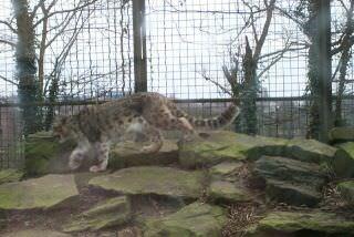 Dudley Zoo & Castle