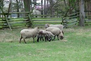 Lower Thorne Farm