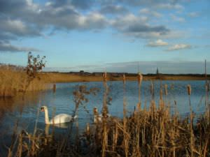 Coatham Marsh - Tees Valley Wildlife Trust