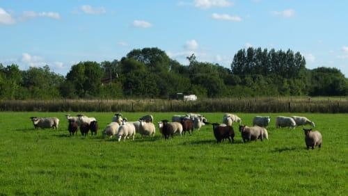 Mayfields Farm