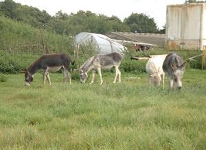 Sankey Farm