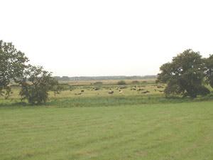 Hill Farm (Ipswich)