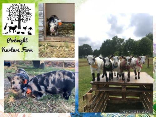 Pirbright Nurture Farm
