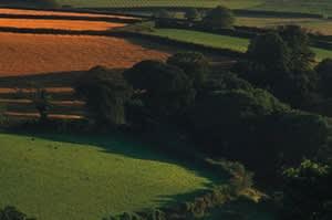 Home Farm (Exeter)