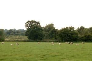 Pannel Farm