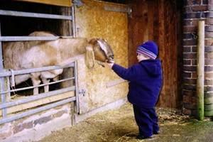 Broomey Croft Children's Farm