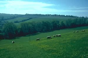 Warleigh Lodge Farm