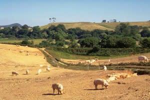 Hall Farm (Lincs)