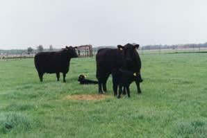 Yelland Cross Farm