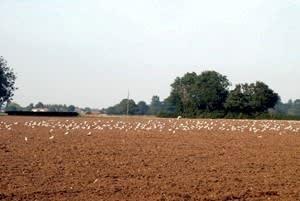 Ladwaithe Farm