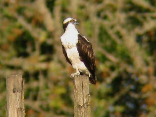 Anglian Bird Watching Centre