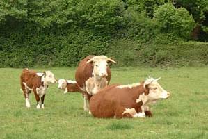 Meadow Bank Farm