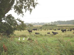 Coleford Farm