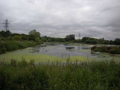 RSPB Rye Meads Nature Reserve
