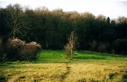 Rectory Meadow