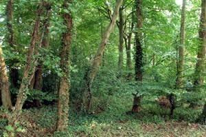 Oxborough Hythe Pasture