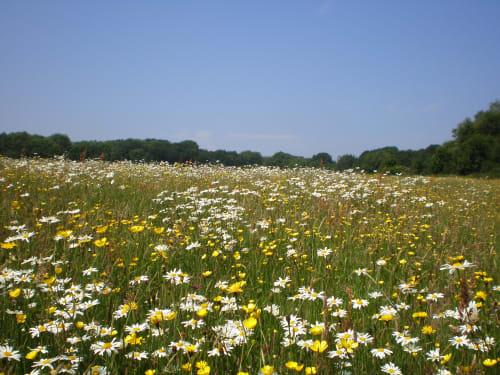 Essex Wildlife Trust Langdon Visitor Centre