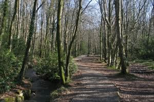 Tehidy Country Park