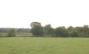 Stanley Hall Farm