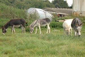 Heybrook Community Farm